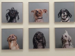 Sophie Gamand's wet dogs