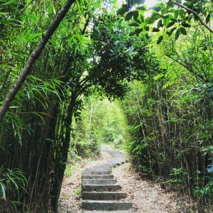Hong Kong bamboo forest