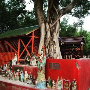hong kong wishing tree