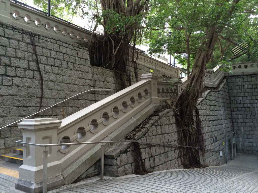 Hong Kong wall tree