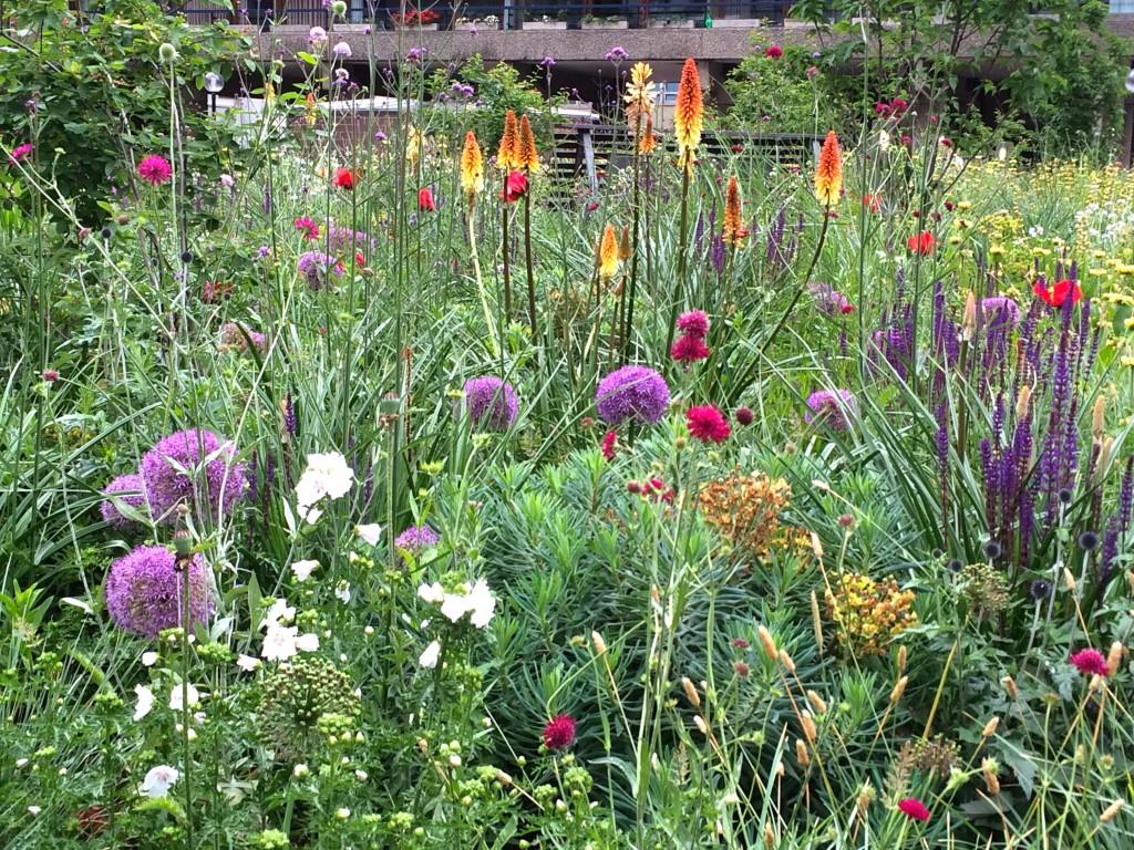 barbican beech garden
