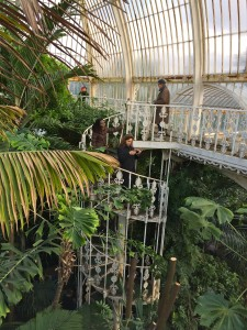 Palm House kew garden