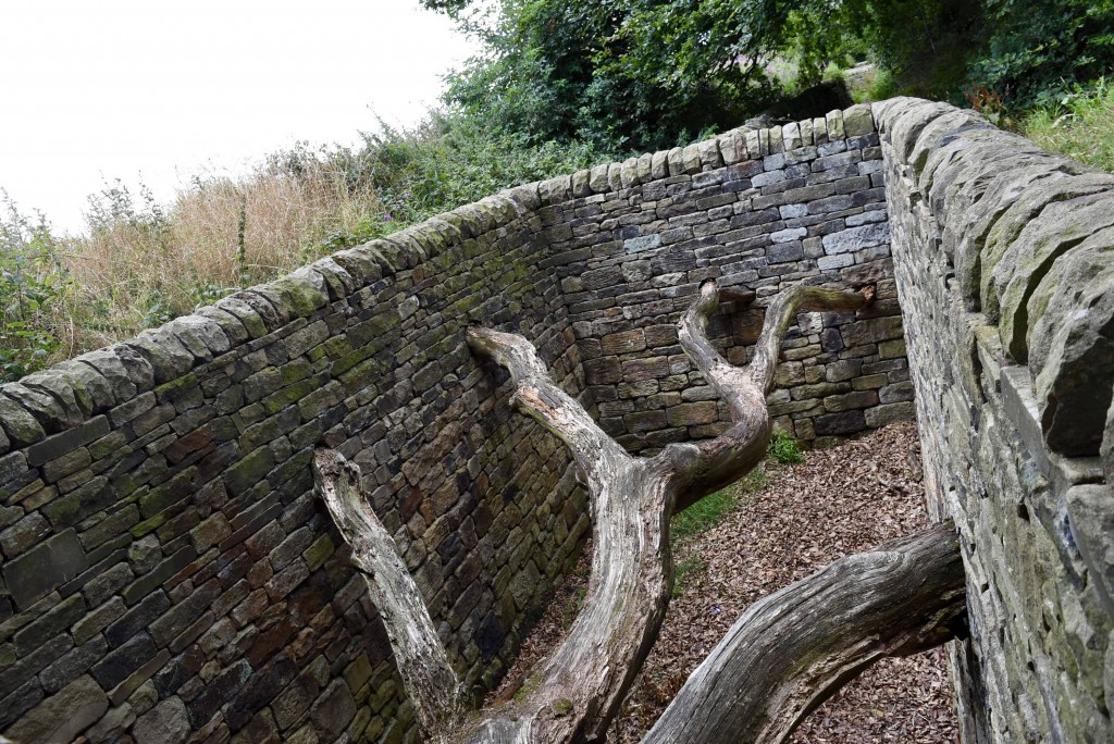 Andy Goldsworthy: Hanging Trees