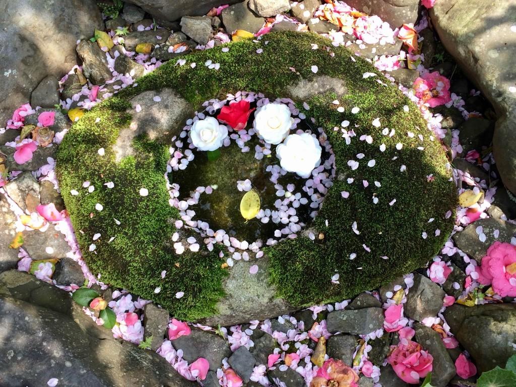 kyoto petals