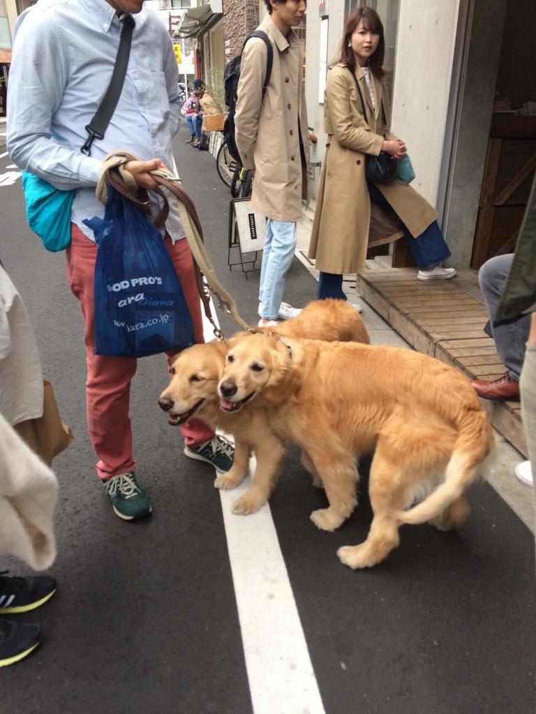 Tomigaya dogs