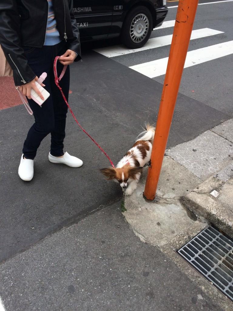 Tomigaya dog