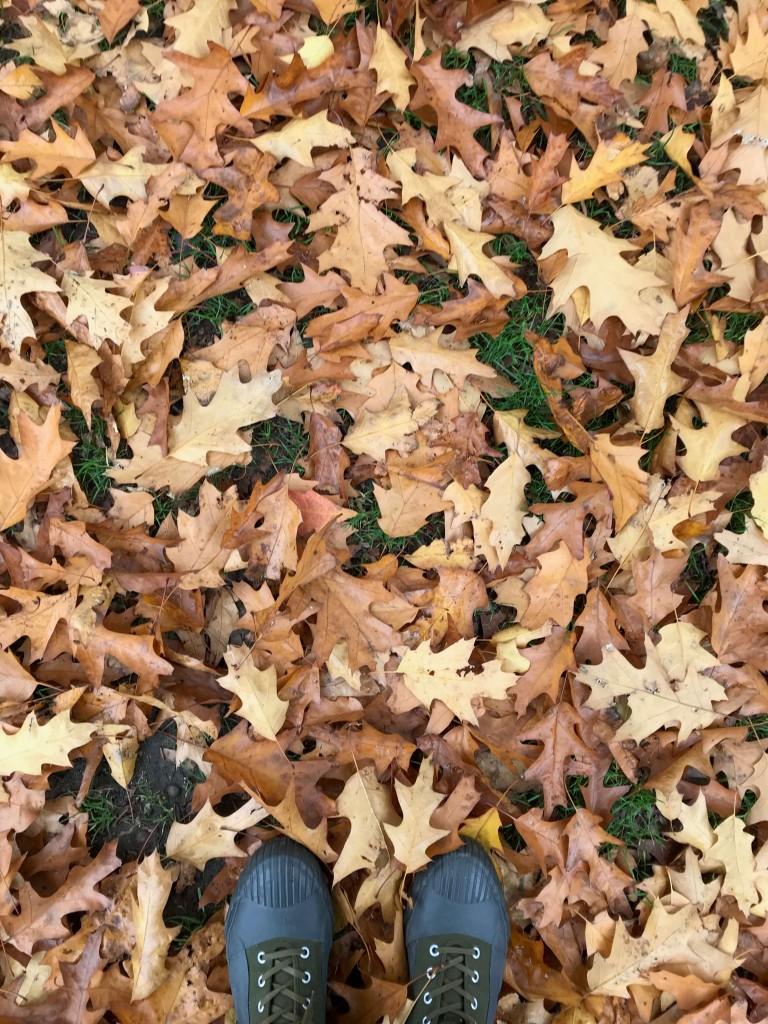 autumn foliage Kew