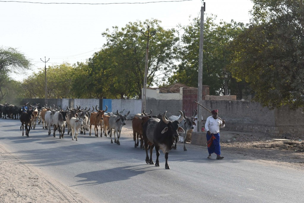 Surendranagar village