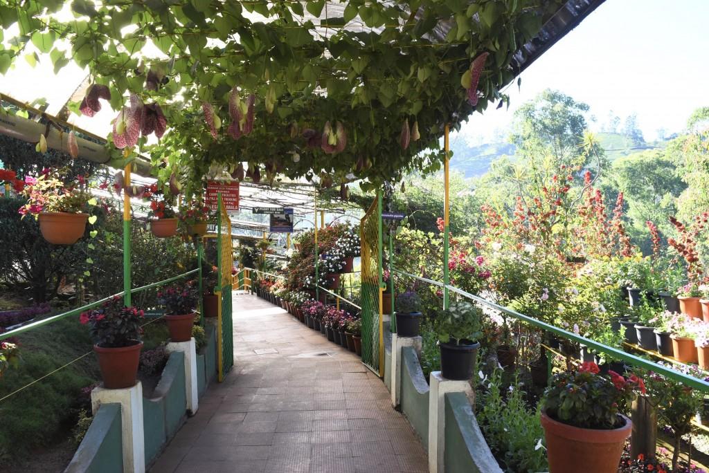 KFDC Floriculture Centre