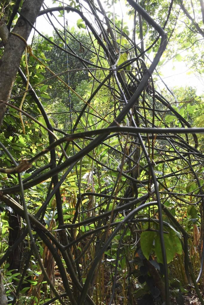 greenland spcie & ayurvedic garden