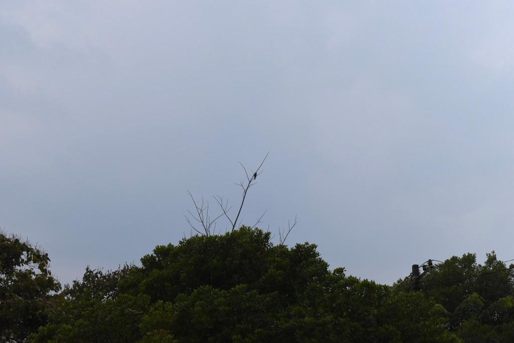 bird watching munnar