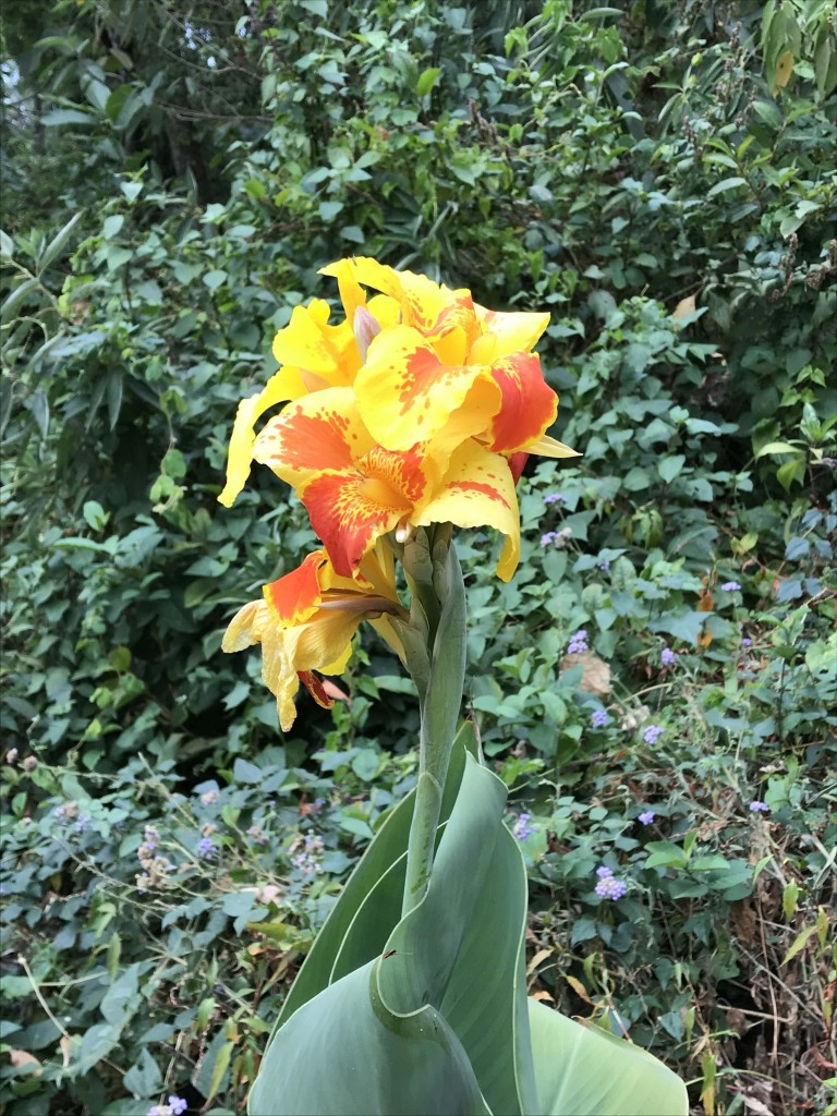 flowers munnar